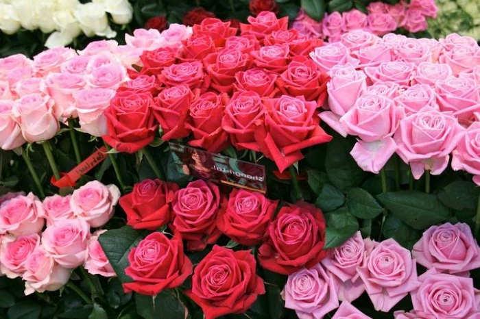 Cara Menanam Bunga Mawar Potong Jwan01